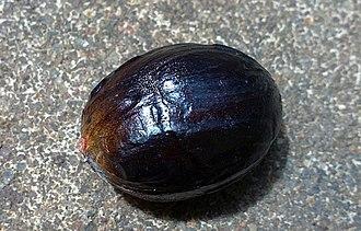 Trimyristin - Seed of nutmeg contains trimyristin