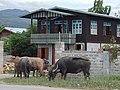 Nyaungshwe, Myanmar (Burma) - panoramio (10).jpg