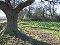 Oak Tree and Woodland - geograph.org.uk - 334983.jpg
