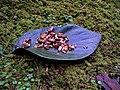 Obon offering.jpg