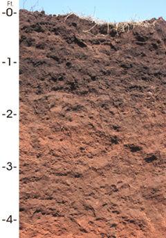 Oklahoma state soil.JPG