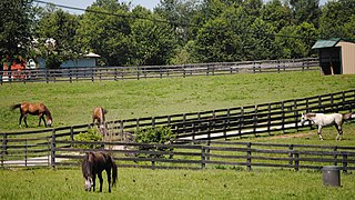Old Friends Equine Thoroughbred racehorse retirement facility
