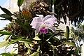 Orchid (3206318823).jpg