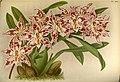 Orchid album (PL 493) (8573852775).jpg