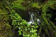 Přírodní rezervace Kavinský potok (11).jpg