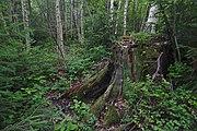 Přírodní rezervace Skalské rašeliniště (10).jpg