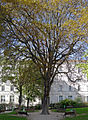 P1280715 Paris XX jardin Carre de Baudouin rwk.jpg