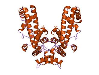 Sigma factor - Crystal structure of Thermus aquaticus RNA polymerase sigma subunit fragment containing regions 1.2 to 3.1