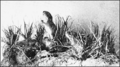 PSM V72 D382 Pennsylvania meadow vole group exhibit.png