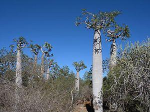 Tsimanampetsotsa National Park