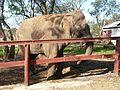 Parc animalier de Taza 12.jpg