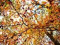 Park views in autumn (Netherlands 2011) (6311404111).jpg
