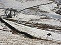 Pastures near Byerhope Farm - geograph.org.uk - 754889.jpg