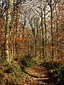 Path in Hembury Woods - geograph.org.uk - 1056572.jpg