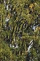 PermaLiv bjørker tre 14-09-21.jpg