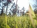 Photosynthesis - Фотосинтеза.JPG