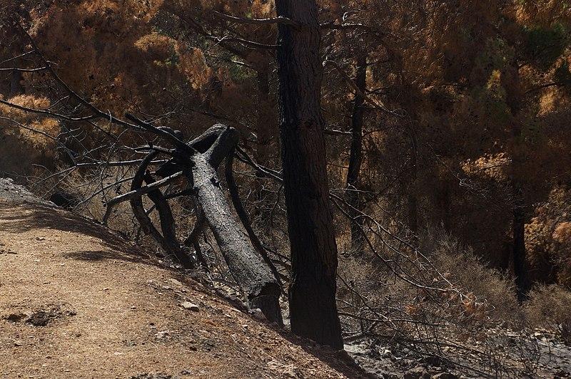 עצים שרופים