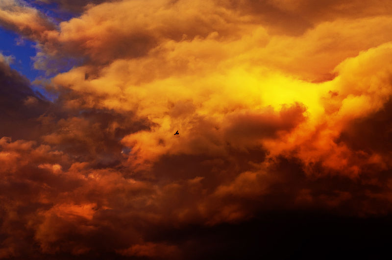 ציפור ושמיים סוערים
