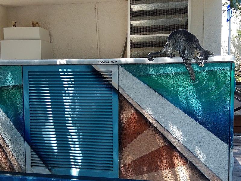 חתולים של רמי מאירי ברמת גן