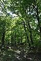 Pilisborosjenő, erdő.jpg