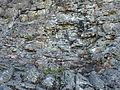 Pilot Rock Lichens.JPG
