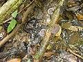 Pilz 4 Nationalpark Tai.jpg
