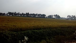Pinapadu Village in Andhra Pradesh, India