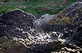 Pinguinos Humbold. en Caleta Piñihuil. Ancud - panoramio.jpg