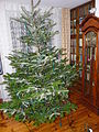 Piotrus XMAS tree preparation - 04.JPG