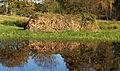 Pitrusmijt (Juncus effusus). Locatie, De Famberhorst.JPG