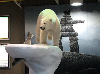 Yellowknife Airport - Polar bear and seal sculpture, in airport lobby