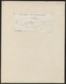 Pomoxis annularis - 1832-1833 - Print - Iconographia Zoologica - Special Collections University of Amsterdam - UBA01 IZ13000082.tif