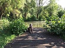 parc saintpierre amiens � wikip233dia