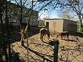 Ponys in Boksee.jpg