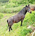 Predjama - horse.jpg