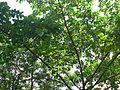 Priyakah (in Oriya) (1069729910).jpg