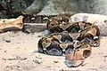 Python Toronto Zoo.jpg