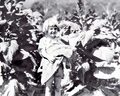 Queensland State Archives 4209 Harvesting tobacco c 1938.png