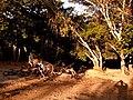 Redenção - State of Pará, Brazil - panoramio (15).jpg