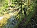 Reichraminger Hintergebirge Triftsteig A 20080507.jpg