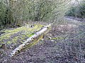 Remnants of Rushey Platt Station, Swindon - geograph.org.uk - 1716321.jpg