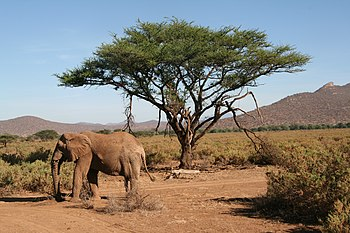 Samburu Nationalpark