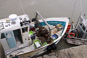 Retour de la pêche du chalutier L' Entracte II (4).JPG