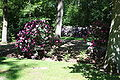 Rhododendronpark Bremen 20090513 142.JPG