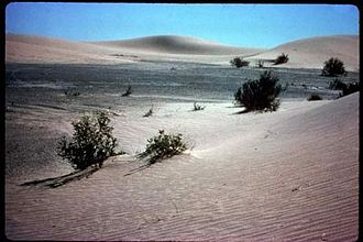 Rice Valley Wilderness - Sand dunes within the Rice Valley Wilderness.