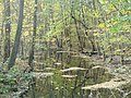 Riemeisterfenn - Fenngraben - geo.hlipp.de - 29914.jpg