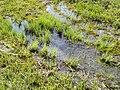 Robenhauser Riet - Strandweg 2012-04-19 13-56-06 (P7000).JPG