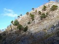 Rock face, Burrington Coombe - geograph.org.uk - 1671535.jpg