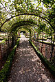 Rose Tunnel at Tyntesfield (3959756522).jpg
