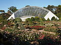 Rose garden at the Adelaide Botanic Garden.JPG